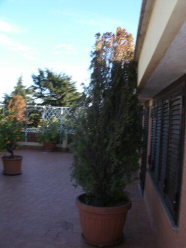 ANGOLO-DEL-TERRAZZO