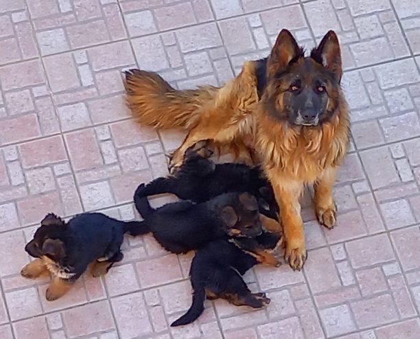 Zara-cuccioli